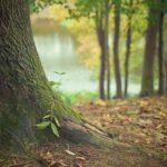 Śliczny oraz {zadbany zieleniec to nie lada wyzwanie, szczególnie jak jego pielęgnacją zajmujemy się sami.